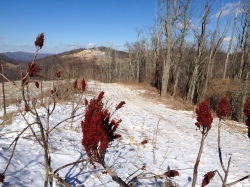 Sumac on the ridge, with spectacular views and a thin blanket of snow.